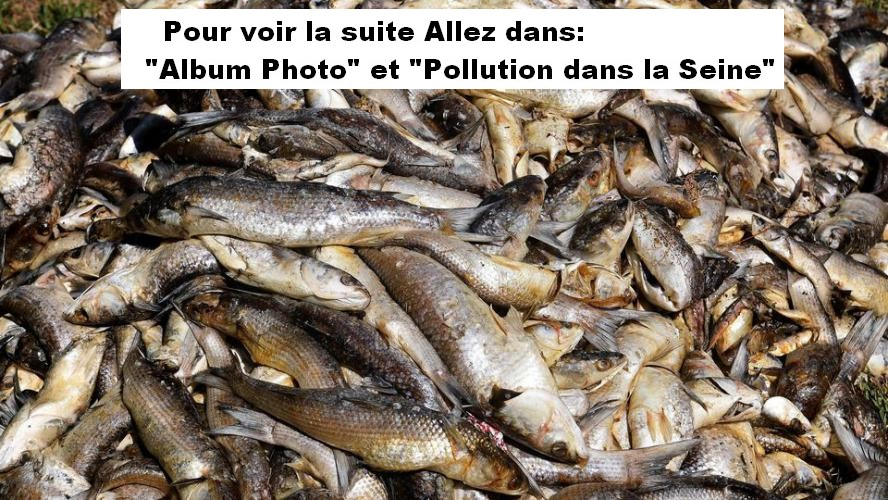 Pollution de la Seine