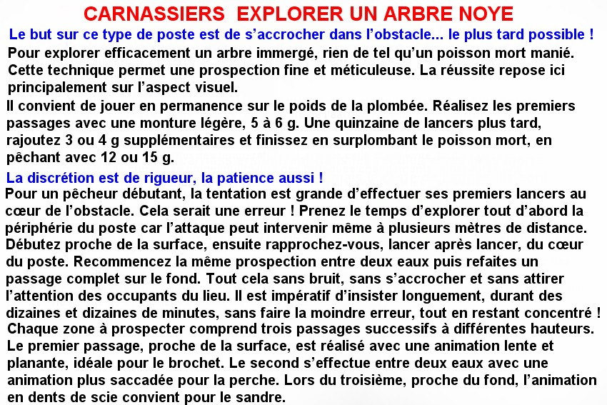 CARNASSIERS  EXPLORER UN ARBRE NOYE