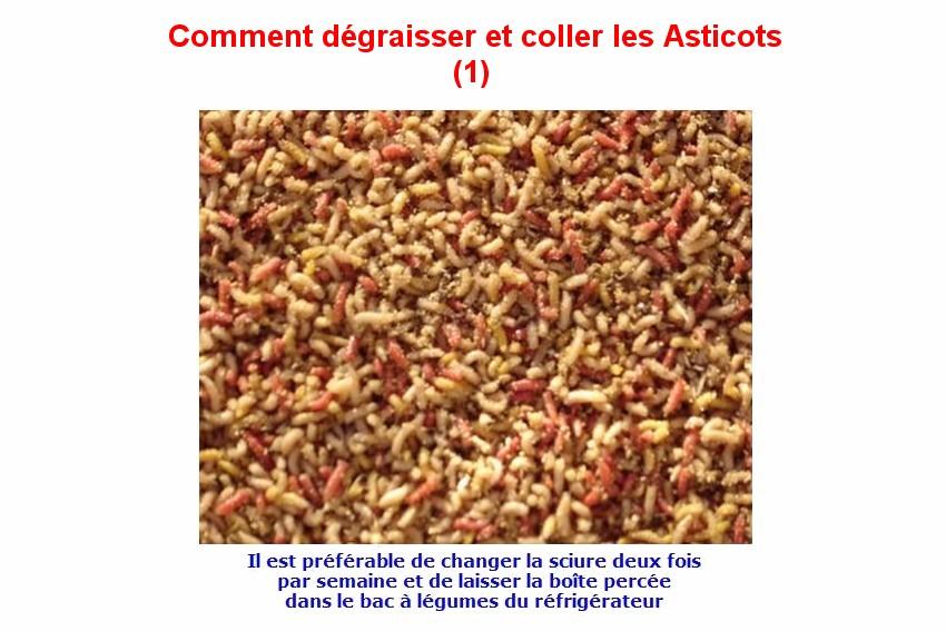Degraisser les Asticots (1)