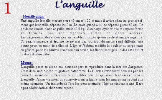 L'ANGUILLE 1