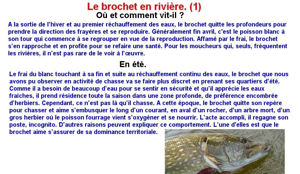 LE BROCHET EN RIVIERE (1)