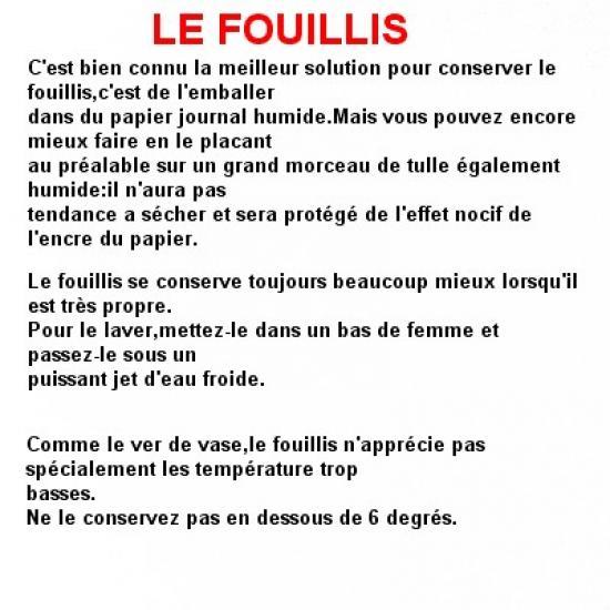 le-fouillis-1