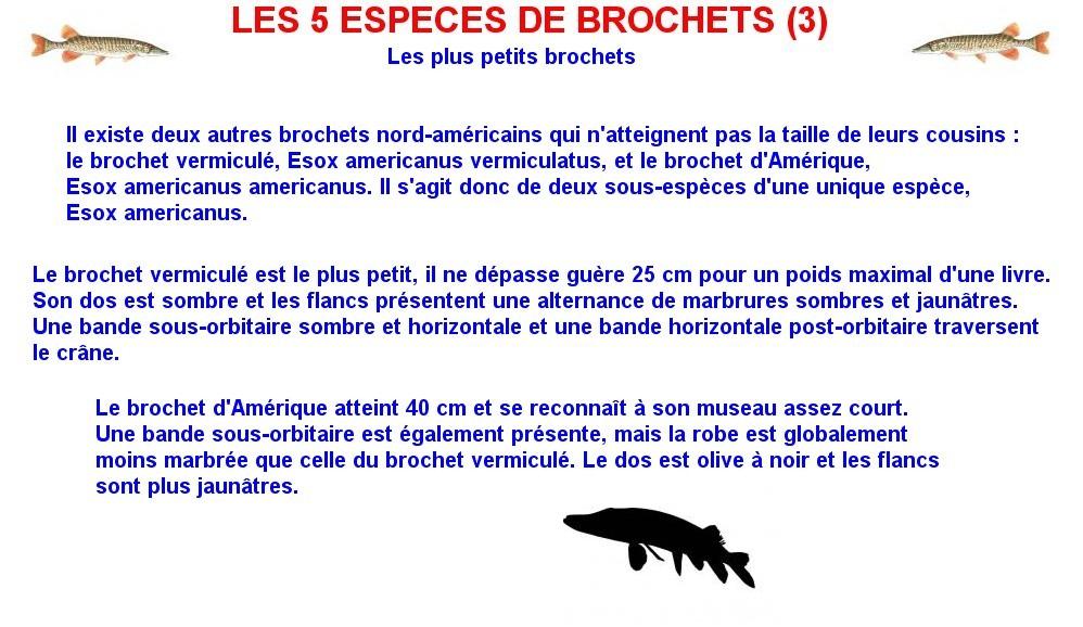 LES 5 ESPECES DE BROCHETS (3)