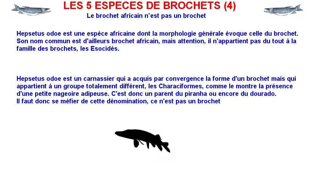 LES 5 ESPECES DE BROCHETS (4)