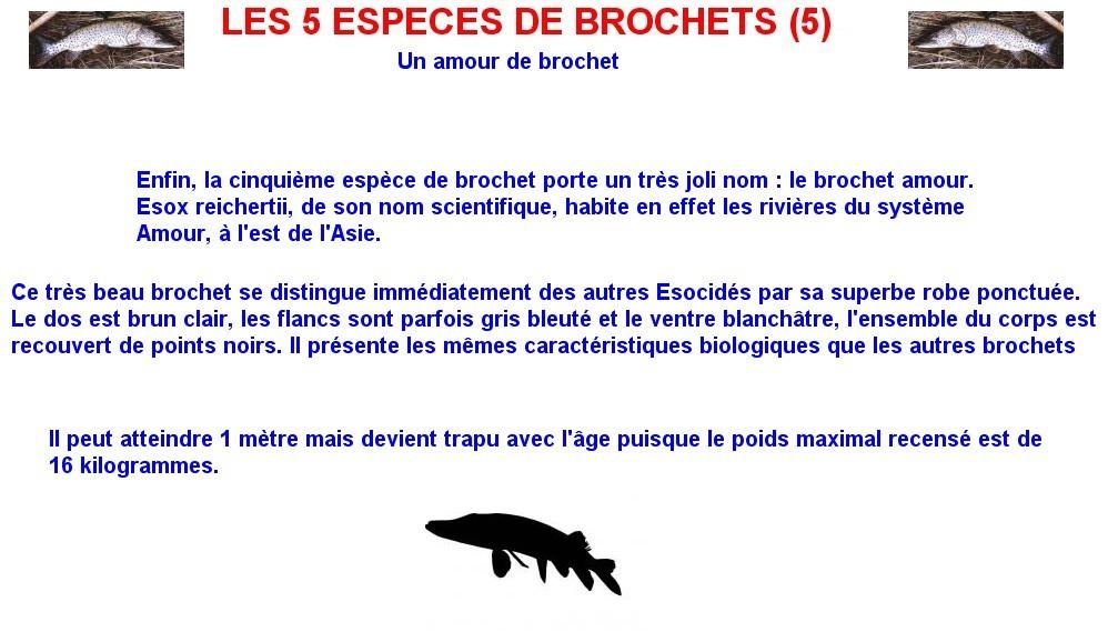 LES 5 ESPECES DE BROCHETS (5)