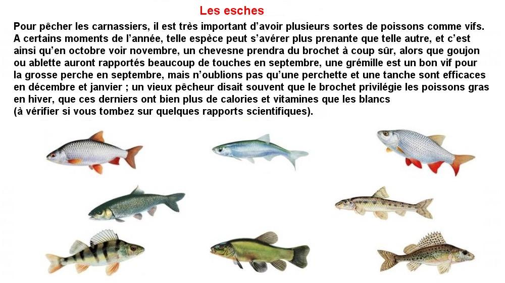 LES ESCHES (14)