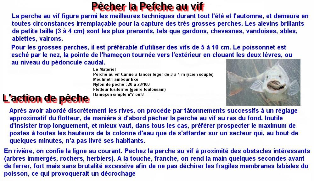 Pêcher la Perche au vif (1)