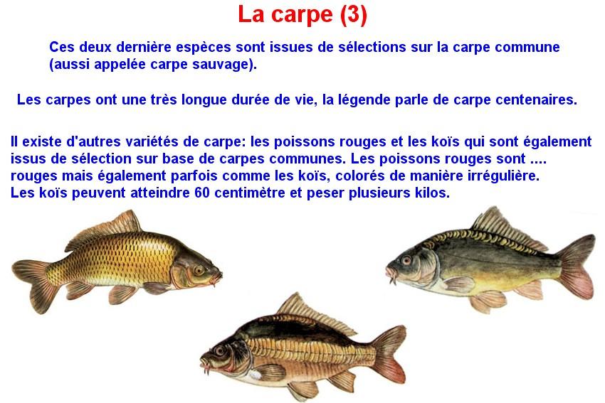Quelques poissons d'eau douce  (10)