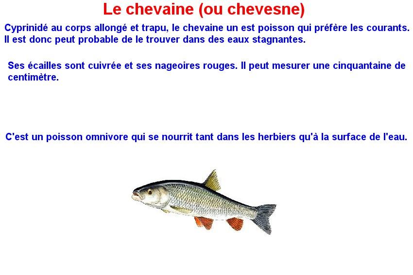 Quelques poissons d'eau douce  (12)