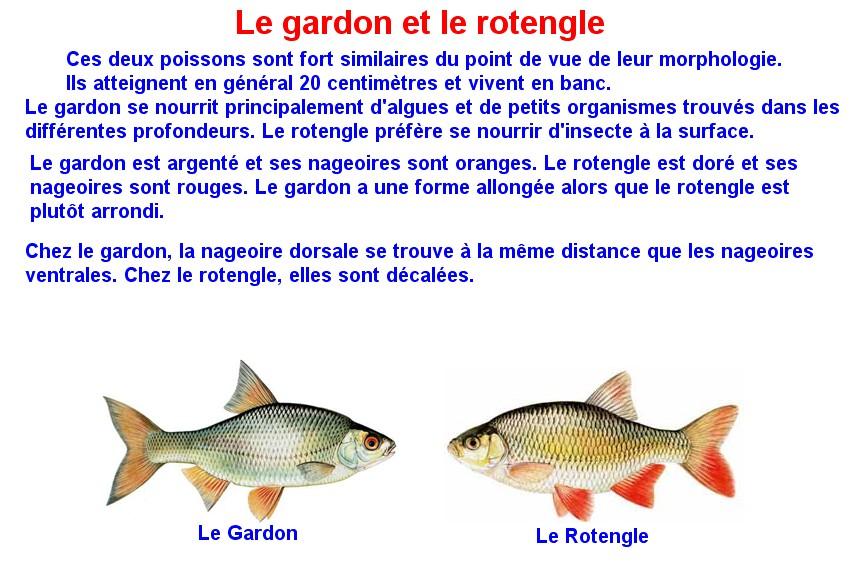 Quelques poissons d'eau douce  (14)