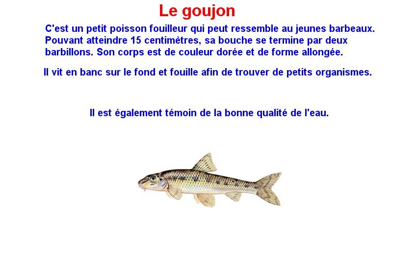 Quelques poissons d'eau douce  (15)