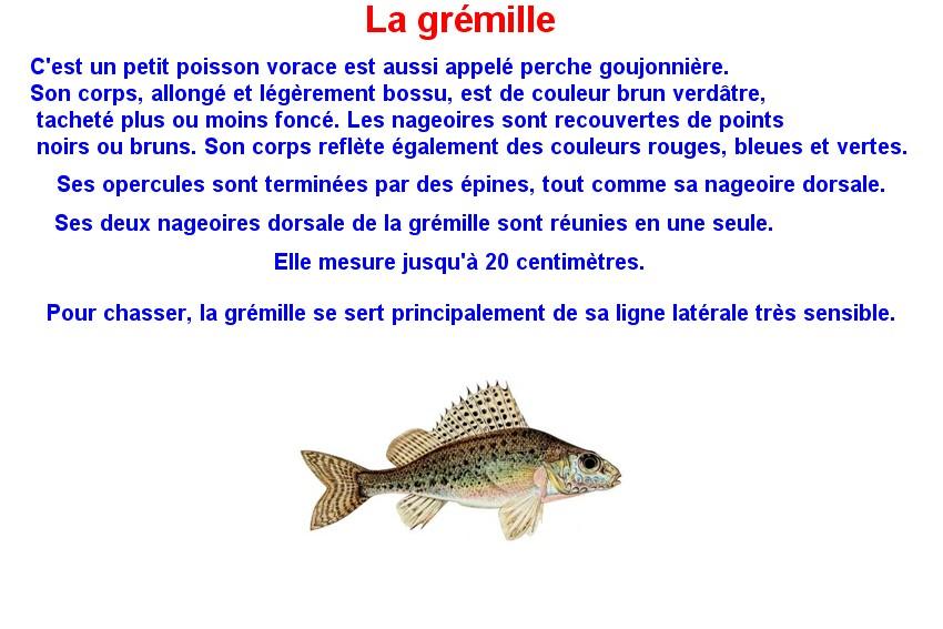 Quelques poissons d'eau douce  (16)