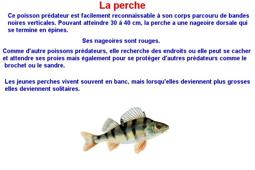 Quelques poissons d'eau douce  (17)
