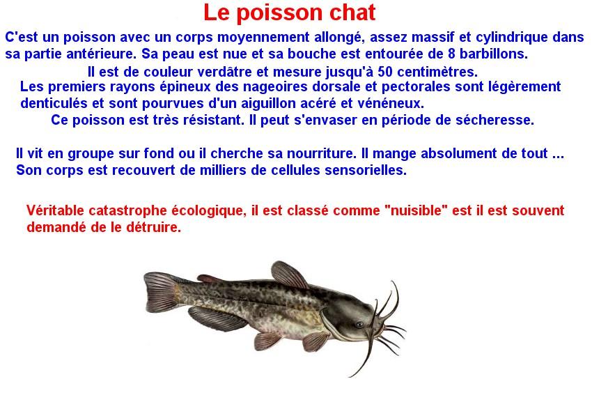 Quelques poissons d'eau douce  (18)