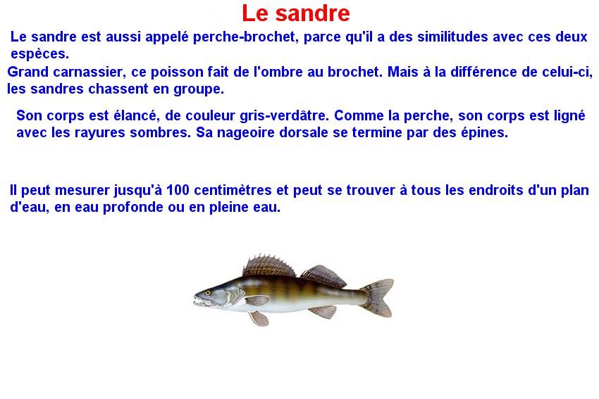 Quelques poissons d'eau douce  (19)