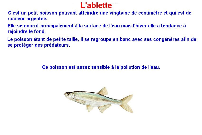 Quelques poissons d'eau douce  (2)