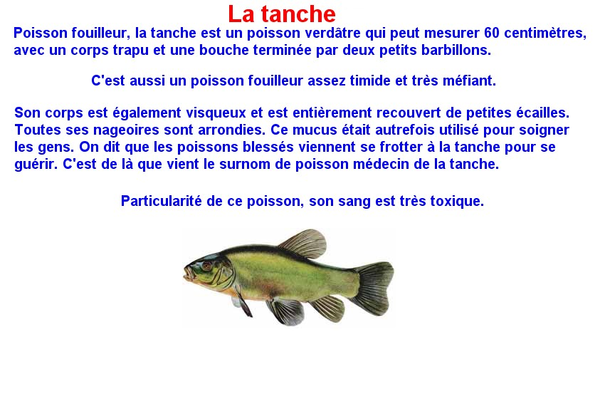 Quelques poissons d'eau douce  (20)