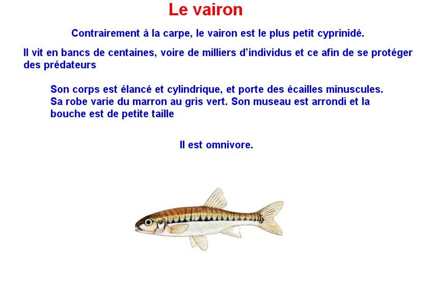Quelques poissons d'eau douce  (21)