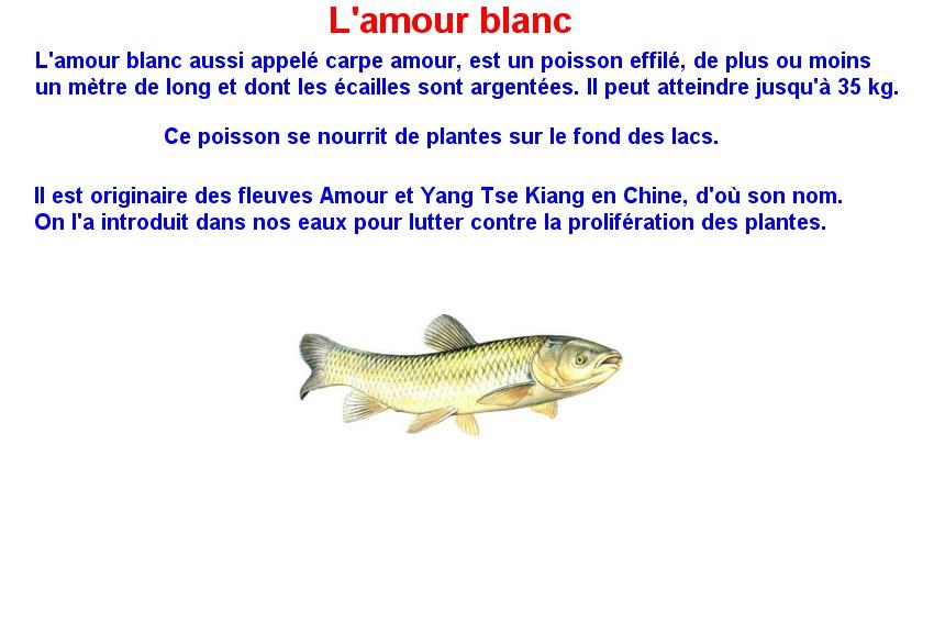 Quelques poissons d'eau douce  (3)