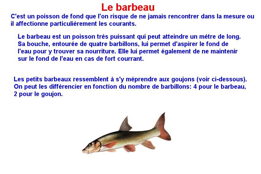 Quelques poissons d'eau douce  (4)