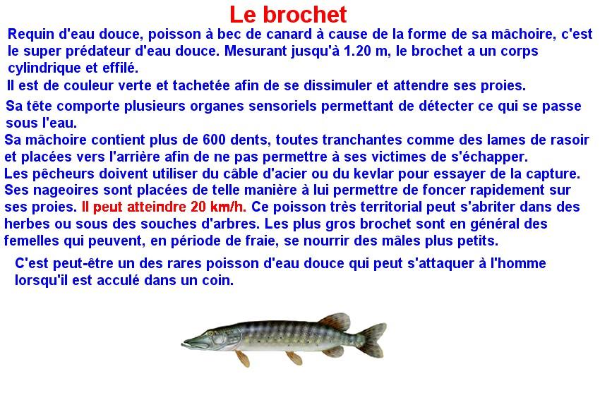 Quelques poissons d'eau douce  (6)