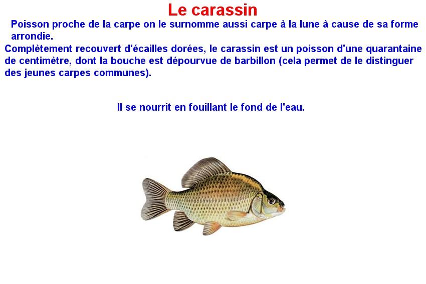Quelques poissons d'eau douce  (7)