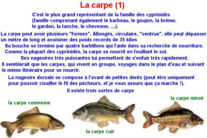 Quelques poissons d'eau douce  (8)