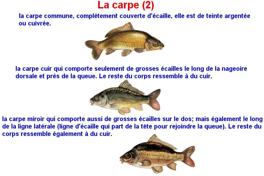 Quelques poissons d'eau douce  (9)