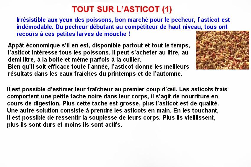 TOUT SUR L'ASTICOT (1)